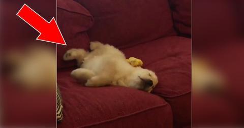 Der Welpe schläft ganz ruhig auf dem Sofa. Doch achtet auf seine Pfote. Ihr werdet schmunzeln!