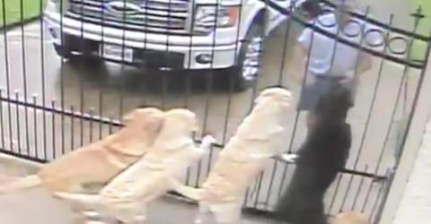 Der Mann sieht sich das Video der Überwachungskamera an. Was der Postbote da mit seinen Hunden anstellt, lässt ihn sprachlos zurück.