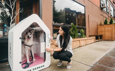 Warum nur sperren immer mehr Amis ihre Hunde in diese Boxen?