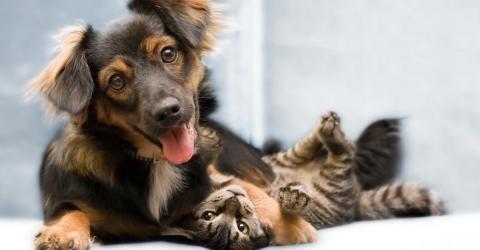 trennung hund teilen