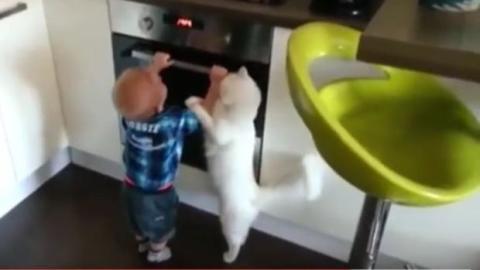 Eine Katze als Schutzengel? Diese Katze tut alles, um zu verhindern, dass sich der kleine Junge verbrennt!