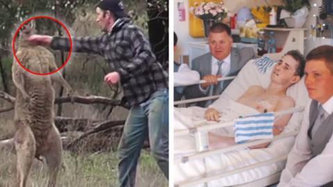 Hinter dem Video eines Mannes, der ein Känguru boxt, steckt eine tragische Geschichte!