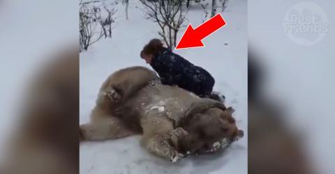 Diese Frau amüsiert sich prächtig mit dem Bären im Schnee