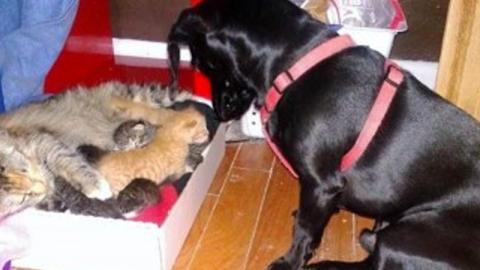 Katzenmama bringt 7 Junge zur Welt. Doch dann kommt der Hund...