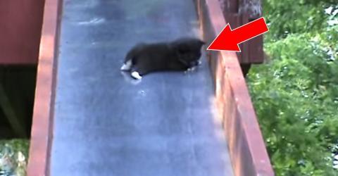 Kätzchen auf Rutsche von Mutter gerettet