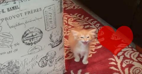 Kleines Kätzchen hat Hunger und gibt seine Bestellung auf wie ein Großes!