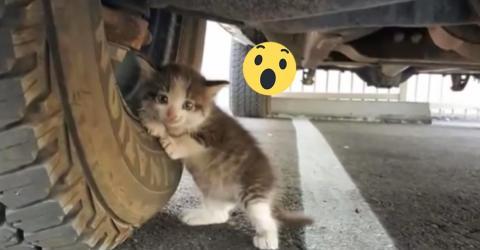 Er findet das kleine Kätzchen unter dem Truck. Und kann den großen Kulleraugen nicht widerstehen, als...