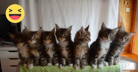Die süßesten Kätzchen der Welt
