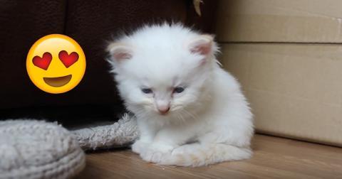 Kleines Kätzchen kann die Augen nicht offen halten