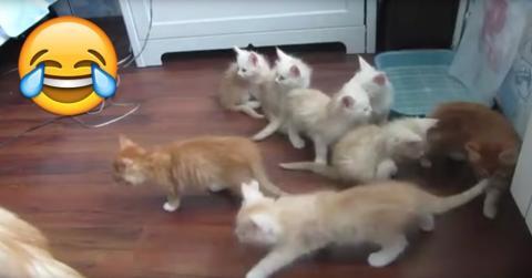 Kätzchen werden von ihrer Mama erschreckt