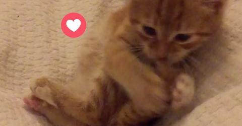 Das kuschelige Kätzchen lässt sich ganz leicht ablenken!