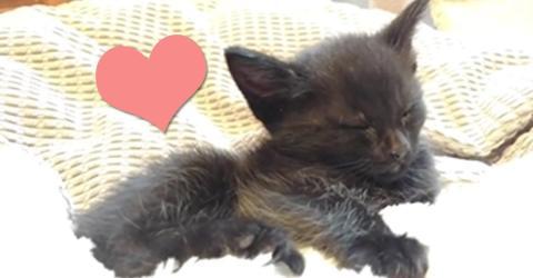 Als das Kätzchen aufwacht, passiert etwas magisches!