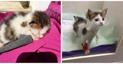 Sie findet ein winziges Kätzchen in einem Müllcontainer...Dann macht sie eine unglaubliche Entdeckung!