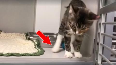Dieses Video eines tanzenden Kätzchens berührt die Internet-Benutzer... Du wirst gleich sehen, warum!