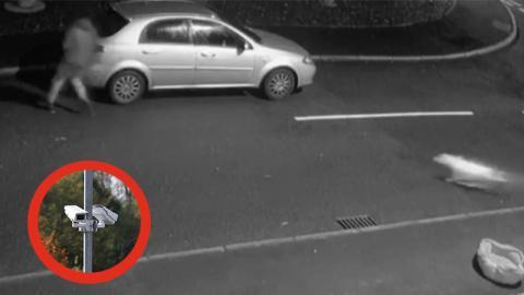 Vor laufender Kamera: Mann setzt Hund aus, doch der Vierbeiner gibt nicht auf