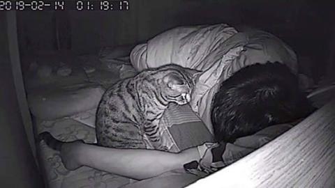 Er filmt seine Katze nachts und traut seinen Augen nicht, als er die Bilder sieht