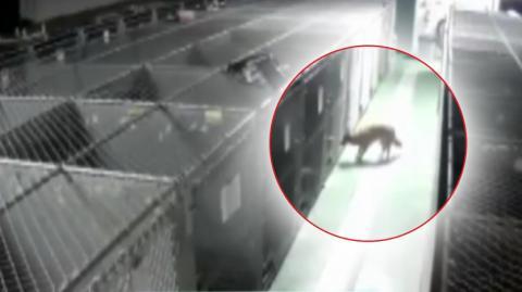 Eine Kamera filmt eine Hündin, die nachts im Tierheim ausbricht... Doch wo geht sie nur hin?