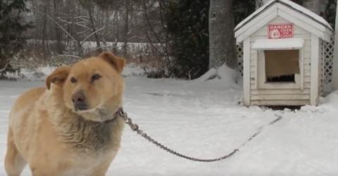 Tierschützer feiern: Dieses neue Gesetz tritt ab sofort in Kanada und Pennsylvania in Kraft