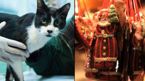 Eine seit sieben Jahre verschwundene Katze wird von ihrer Familie an Weihnachten wiedergefunden