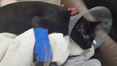 Diese Katze musste in die Notaufnahme, weil sie ein ganz banales Objekt verschluckt hat
