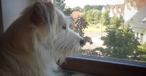 Der unsterblich verliebte Hund sitzt jeden Tag am Fenster, doch sein Schwarm ist mehr als ungewöhnlich