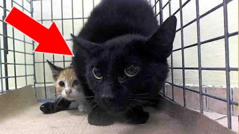 Niemand wollte diese verängstigte schwarze Katze... Es ist herzzerreissend, warum sie so verängstigt war!