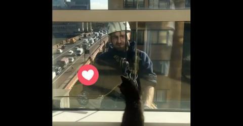 Wie diese Katze auf die Fensterputzer reagiert, ist einfach göttlich!