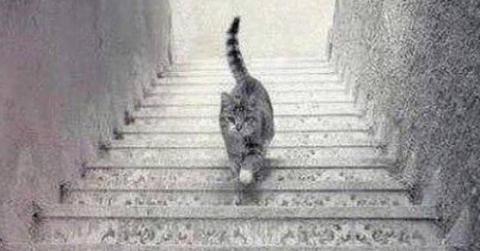 Optische Täuschung: In welche Richtung läuft diese Katze?