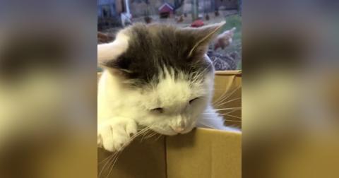 Diese Katze hat eine ganz besondere Lieblingsbeschäftigung! Ihr werdet Schmunzeln müssen!