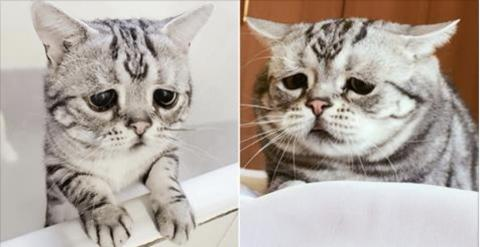 Warum sieht diese Katze nur immer so traurig aus?