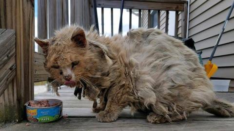 Eine Hilfsorganisation rettet eine völlig verfilzte und verdreckte Katze. Am nächsten Tag trauen sie ihren Augen nicht!