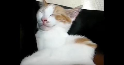 Die Katze schläft auf ihrem Freund, dem Hund