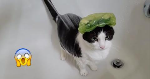Was diese Katze gleich in der Dusche macht, ist einfach genial!