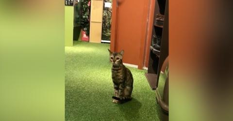 Diese Katze ist sehr neugierig! Achtet darauf, was sie gleich Geniales macht, um ihr Herrchen auszuspionieren!