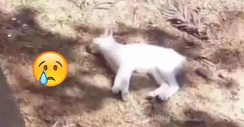 Das Kätzchen fällt vom Balkon und kann sich nicht mehr bewegen. Doch dann passiert, womit keiner mehr gerechnet hat!