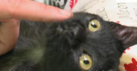Schwerkranke Katze bekommt ihren eigenen Rollstuhl und findet eine neue, liebevolle Familie
