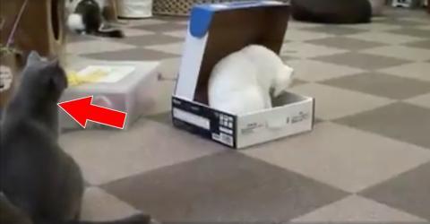 Ihre Freundin ist neidisch auf die schöne Box. Doch was