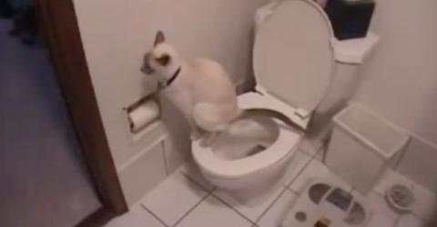 Besitzer können ihren Augen nicht trauen, als sich die Katze der Toilette nähert!