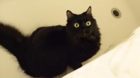 Mörderische Katzenliebe: So versucht deine Katze dich umzubringen