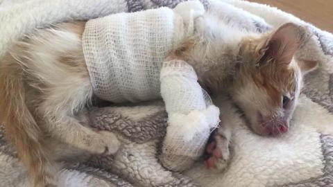 Ein kaum ein paar Tage altes Kätzchen muss nach einem Unfall ums Überleben kämpfen! Doch dann passiert etwas Wunderbares!