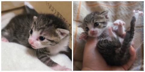 Ein verwaistes Kätzchen findet eine neue Familie... fürs Leben!