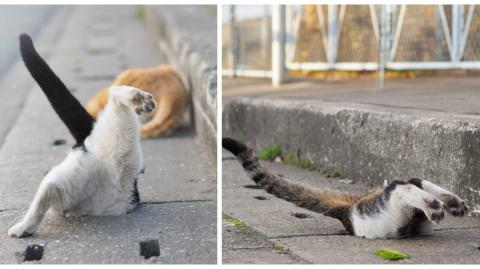 Dieser Mann fotografiert streunende Katzen, die aus Spaß in Abflusslöcher springen!