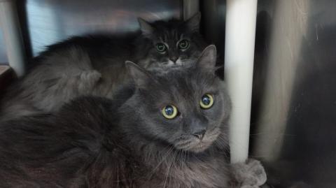 Ein Mann, der sich nicht mehr um seine Katzen kümmern kann, gibt ihnen eine zweite Chance