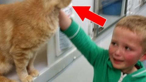 Ein kleiner Junge findet seine vermisste Katze nach 18 Monaten wieder. An einem völlig überraschenden Ort.