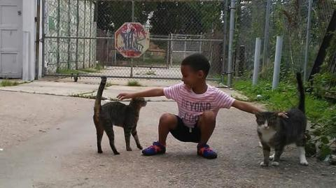 Philadelphia: Kleiner Junge hilft streunenden Katzen