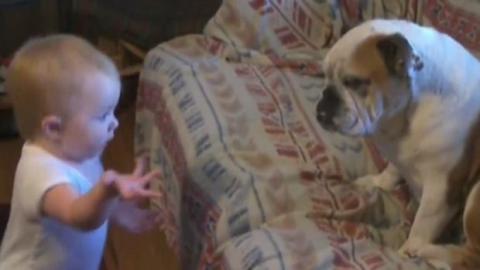 Dieses Baby ist gar nicht zufrieden mit dem Verhalten seines Hundes. Und es scheut sich nicht, ihm das auch mitzuteilen