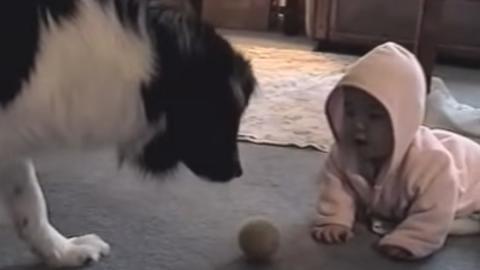 Dieser Hund zeigt dem Baby wie man Ball spielt. Ihr Zusammenspiel ist total süß
