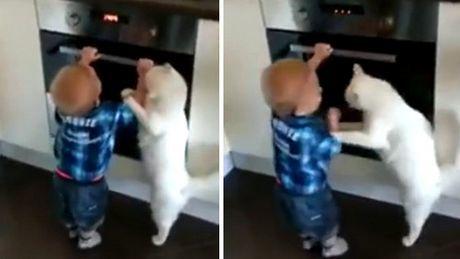 Die Katze hindert das Kind an einer Dummheit