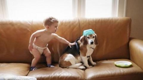 Kind schreibt seinem Hund im Paradies und erhält eine bewegende Antwort.