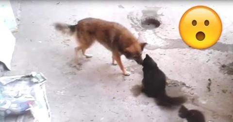Hund und Katze sind Freunde